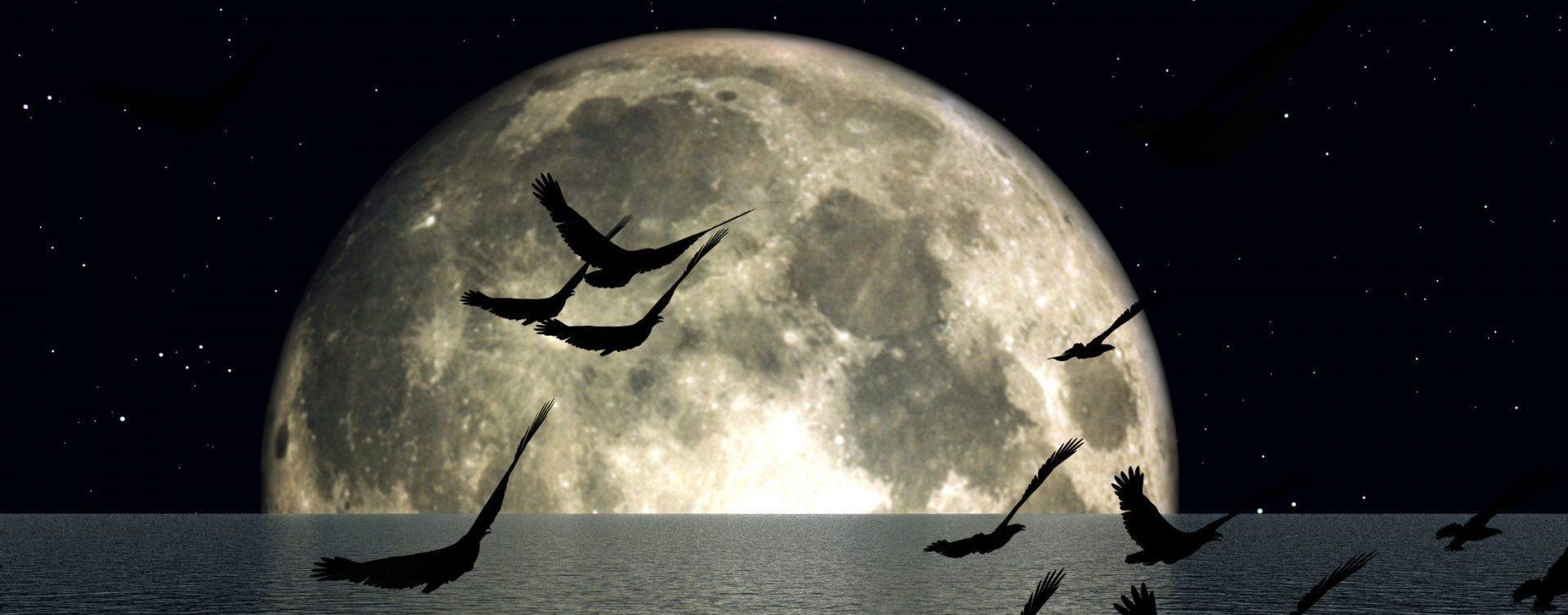 Metis Wisdom Dr Janeta Tansey Musings Navigation Night Header