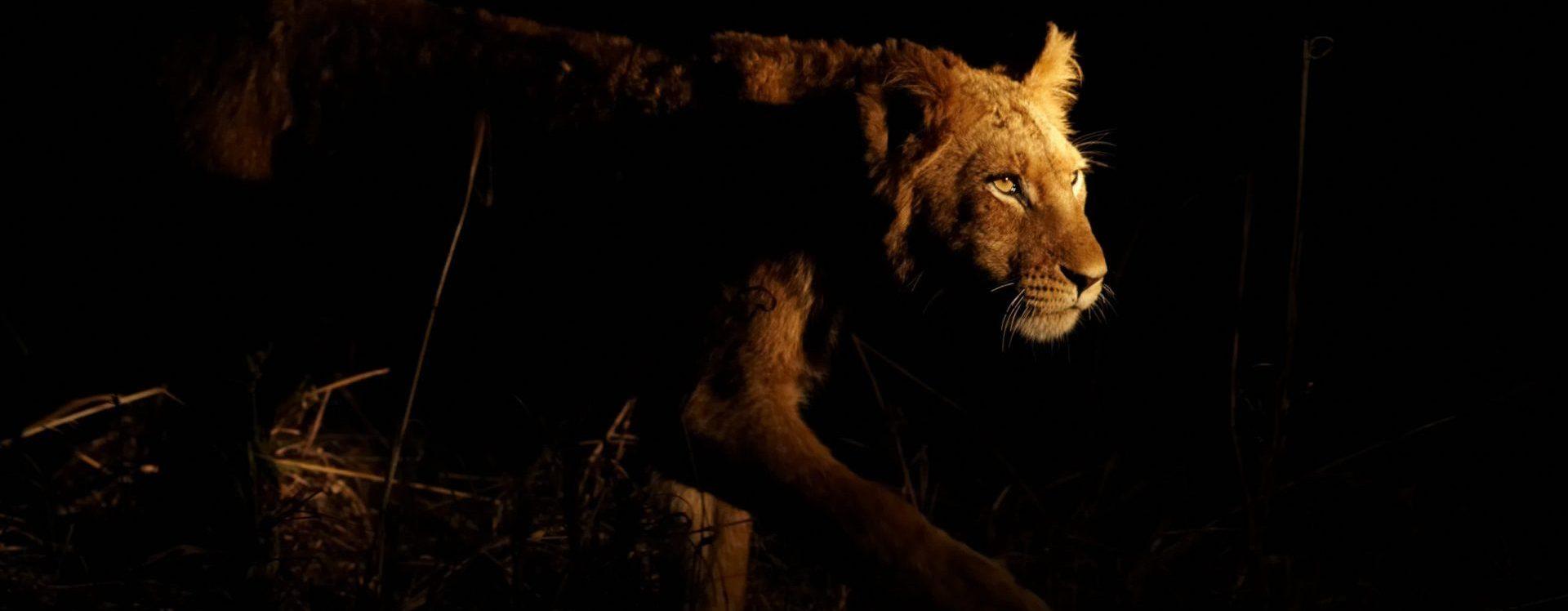 Metis Wisdom Dr Janeta Tansey Lioness Header