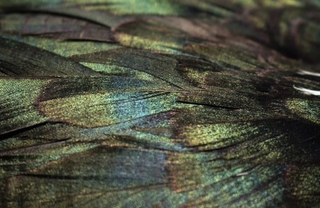 Shimmering sheen and shifting movement are the nature of mētis.