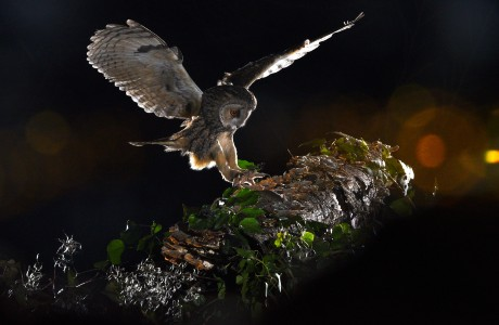 Mētis is swift, as prompt as the opportunity that it must seize on the wing.